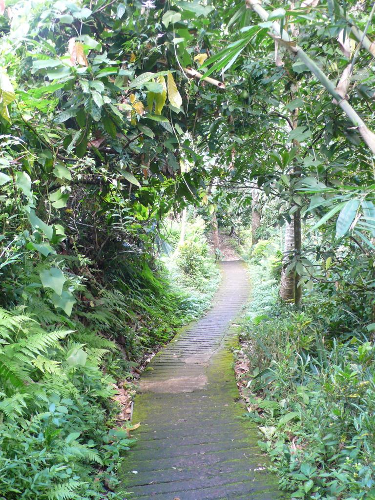 Der Weg durch den dichten Blätterwald...